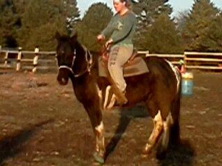 Cajun - Stallion